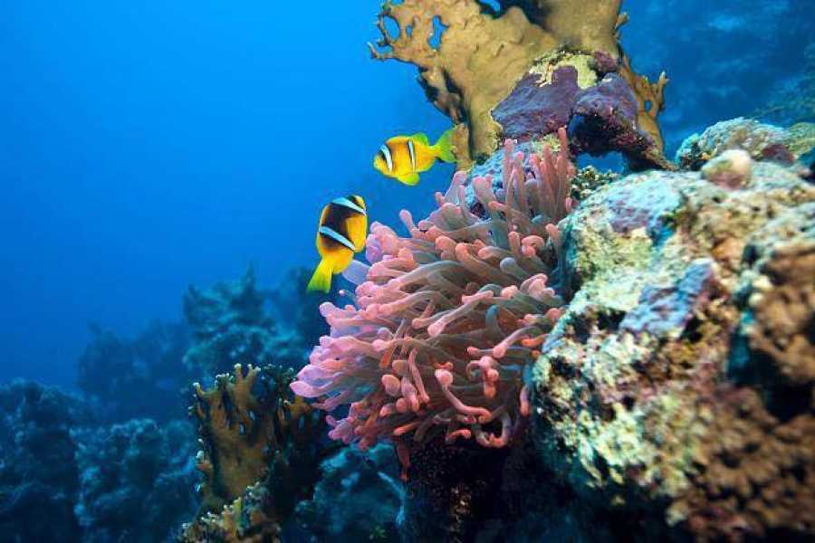 Deluxe Travel Sharm El Naga Bay Snorkeling Trip