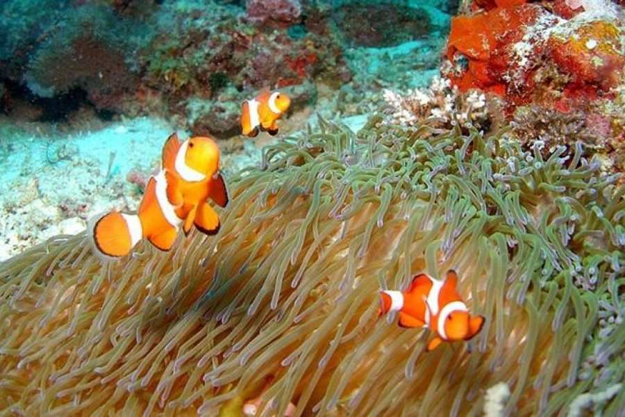 Deluxe Travel Snorkeling Trip at Ras Mohamed