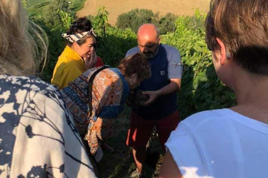 Enoteca Emilia Romagna Tasting of Villa Venti