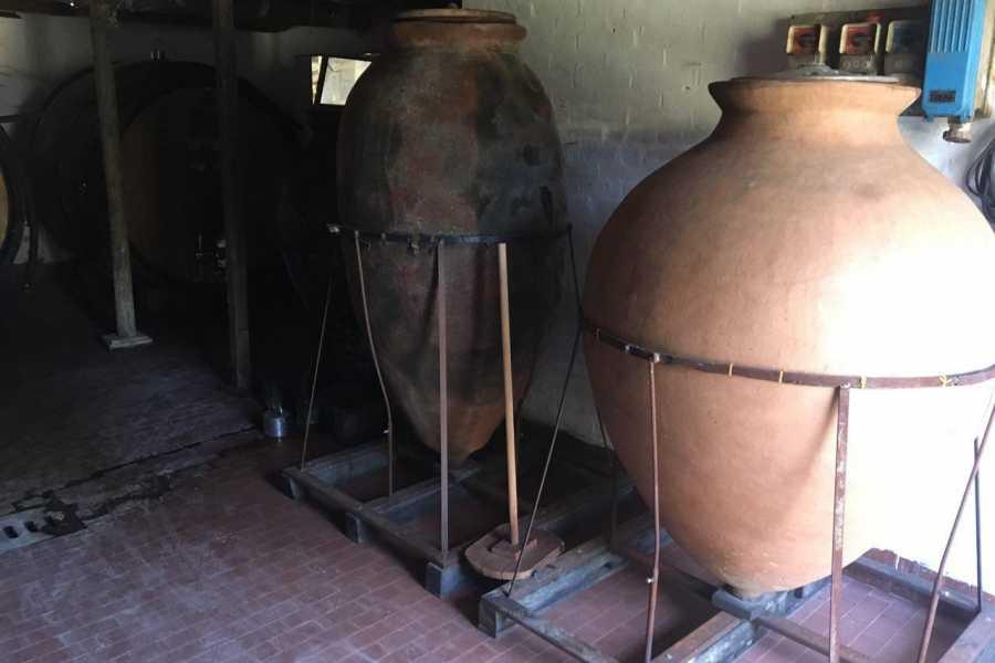 Enoteca Emilia Romagna Visita aziendale con degustazione vini Tre Monti
