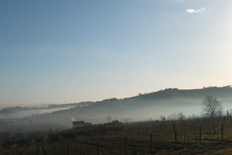 Enoteca Emilia Romagna Visit and tasting at Estate la Viola