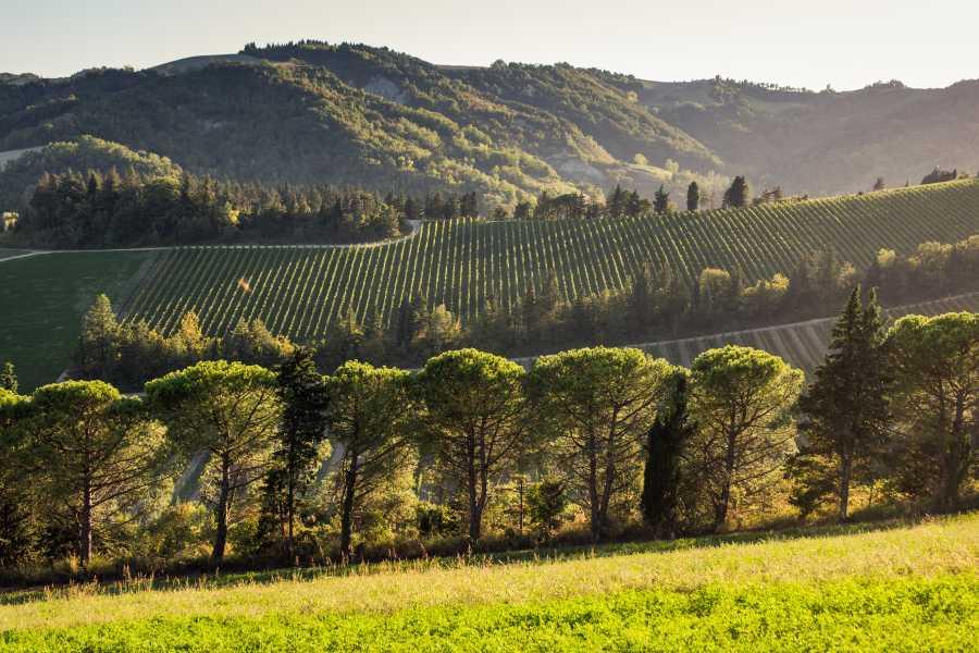 Enoteca Emilia Romagna VISIT AND WINE TASTING at Pandolfa