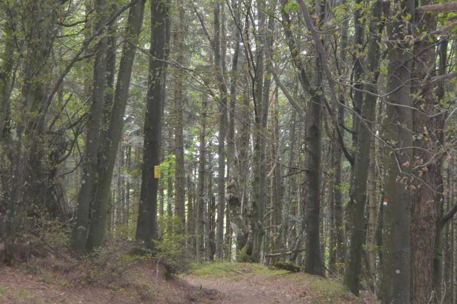 Emilia Romagna Welcome Forest Bathing nella Foresta UNESCO - I Percorsi del Savio