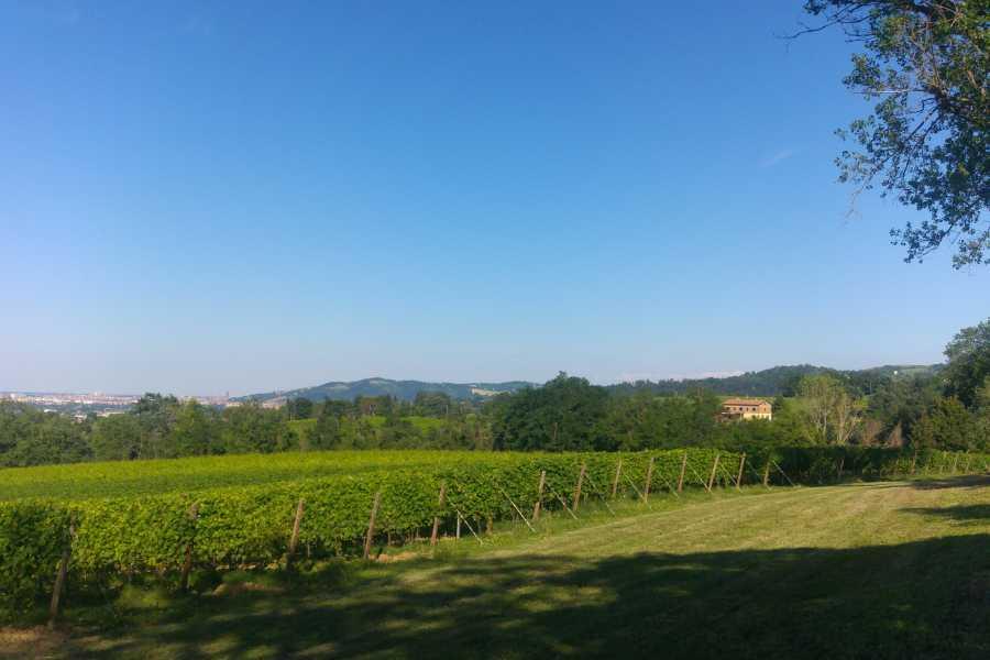 Enoteca Emilia Romagna Visit and wine tasting at Manaresi