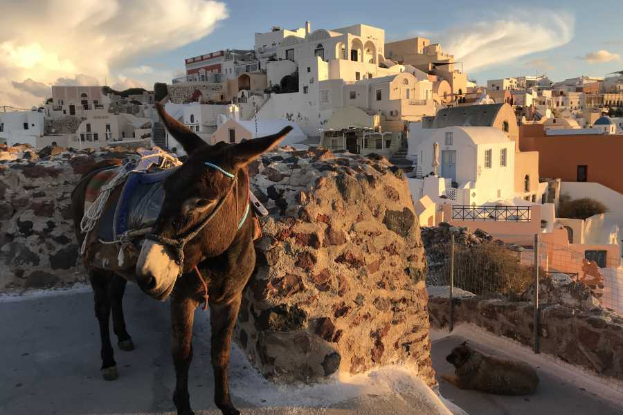 Bus2Alps AG Greece Island Hopping