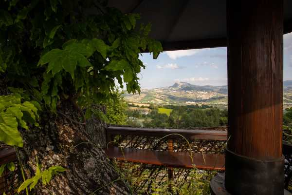 Tasting and visit among vineyeards, olive trees, animals and trails