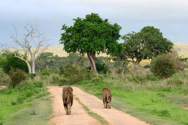 2 Days Tanzania Safari (Tarangire National Park & Ngorongoro Crater) with Africa Natural Tours Ltd