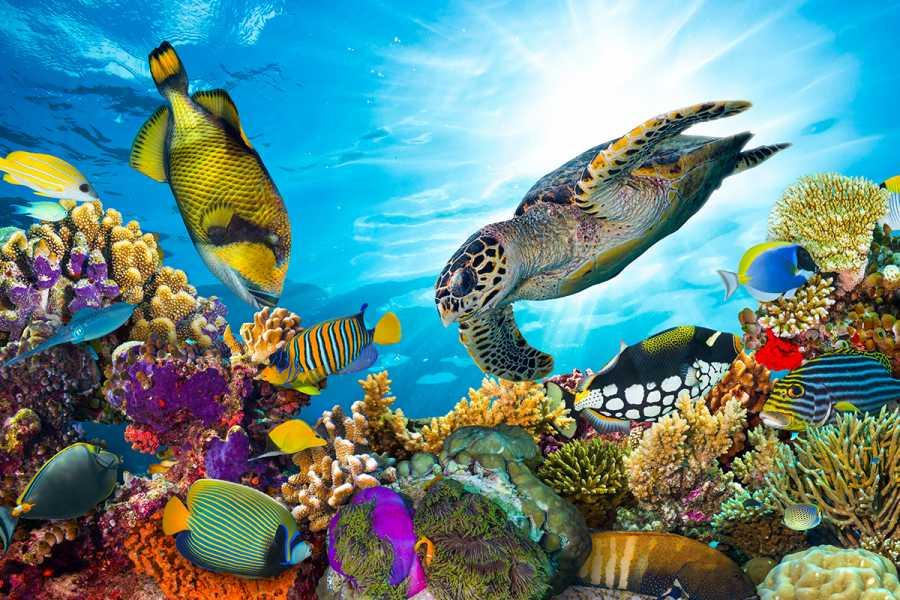 El Gouna Tours Snorkeling Trip At Satayh Dolphin Reef | Marsa Alam Day