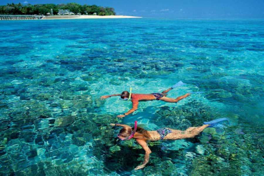 El Gouna Tours Snorkeling Excursions at Sataya Dolphin Reef From Marsaalam