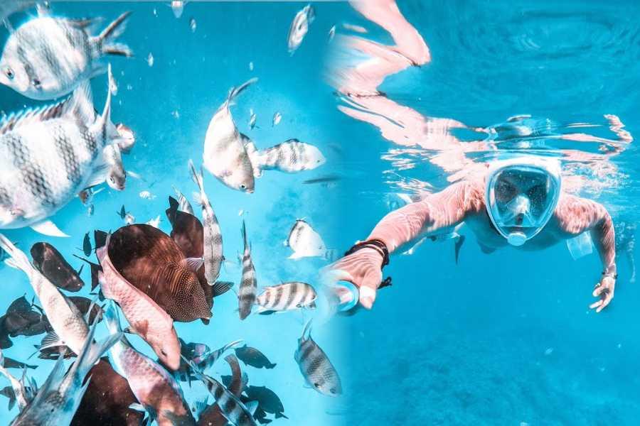 El Gouna Tours Snorkeling Excursions at Hamata Islands From Marsaalam