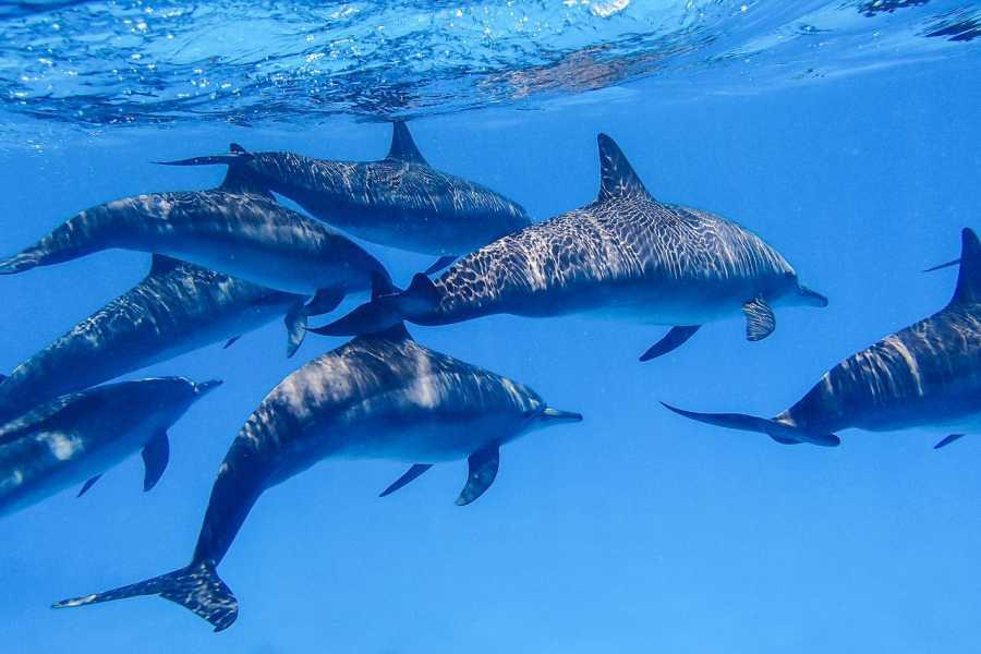 El Gouna Tours Overnight Snorkeling trip at Sataya dolphin Reef Marsaalam