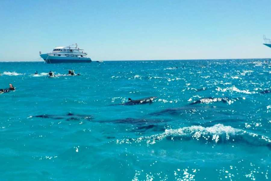 El Gouna Tours Half Day Snorkeling Excursion To Sharm El luli
