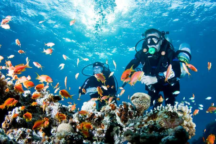 El Gouna Tours Diving Excursions at Sataya Dolphin Reef Marsaalam