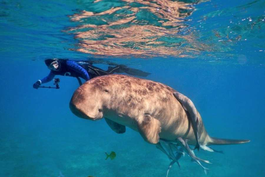 El Gouna Tours Abu Dabbab Dugong snorkeling excursions from Hurghada
