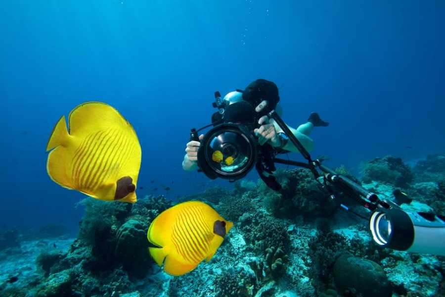 El Gouna Tours Day Scuba Diving Hurghada Egypt Red Sea