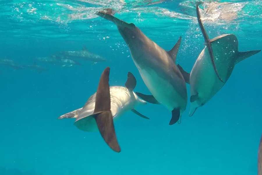 El Gouna Tours Utopia island Snorkeling in Hurghada