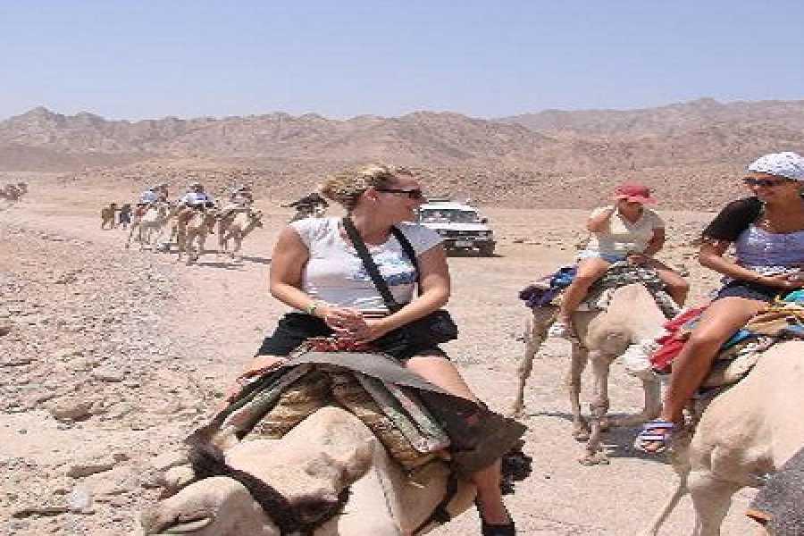 El Gouna Tours Hurghada Desert Sunset Safari Excursion By Quad Bike