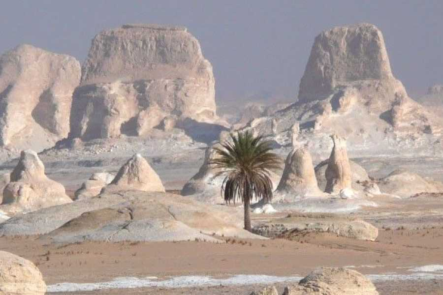 El Gouna Tours Two Days Excursion White Desert and Bahariya Oasis  From Hurghada