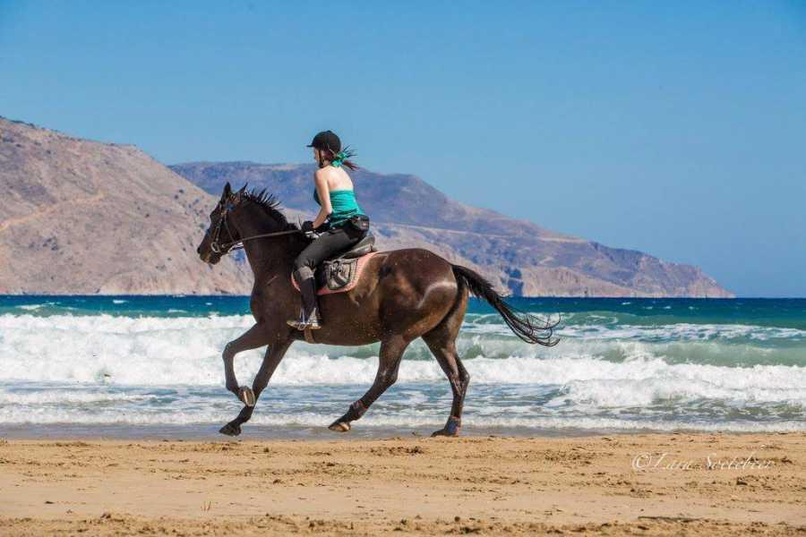 Destination Platanias HORSEBACK RIDING - Riding & swimming with horses 2,5h