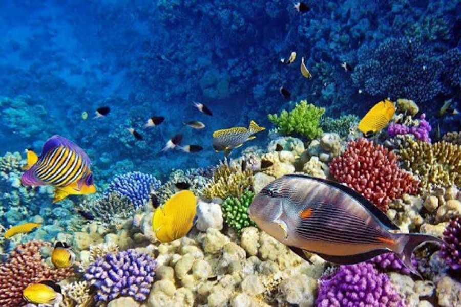 Daily tours Egypt Abu Dabab Dugong bay trip from Hurghada