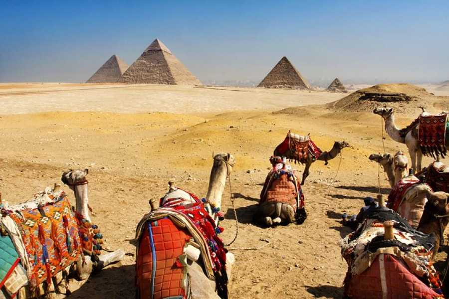 El Gouna Tours Two Days Trip Cairo and Alexandria Tour from Alexandria Port