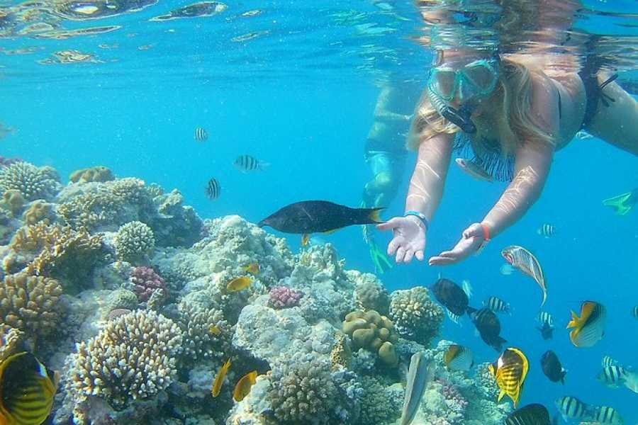 Daily tours Egypt Orange bay snorkeling trip from Hurghada