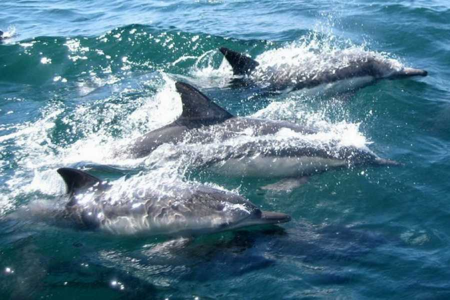 Daily tours Egypt Dolphin house snorkeling trip from Hurghada