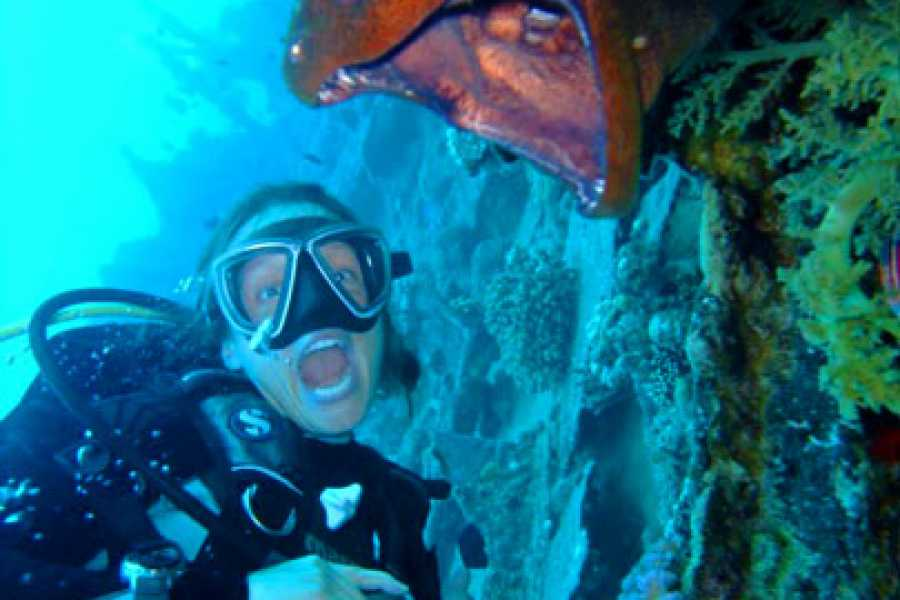 Daily tours Egypt Scuba Diving Trip in Hurghada