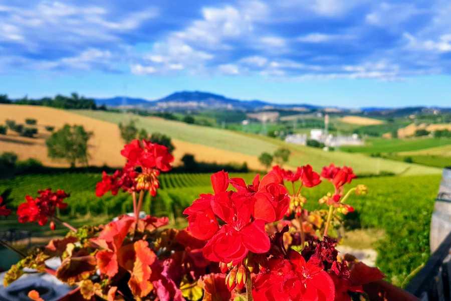 VisitRimini Degustazione San Valentino - I migliori vini Italiani