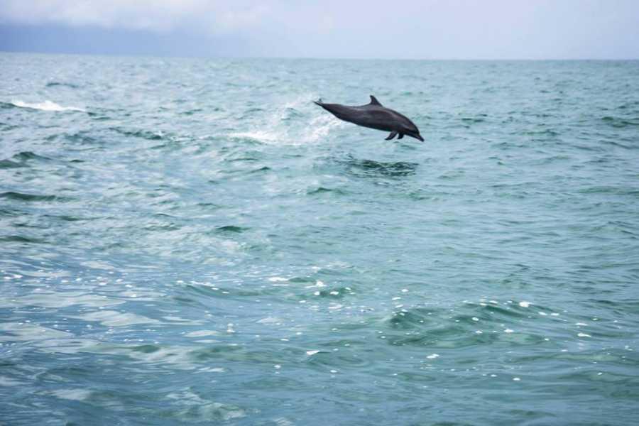 Uvita Information Center Caño Island from Uvita - Snorkeling full day tour by  Bahia Aventuras