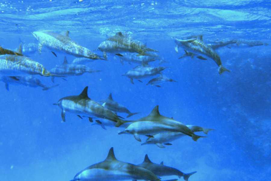 Daily tours Egypt Samadai Dolphin House Snorkeling Trip in Marsa Alam