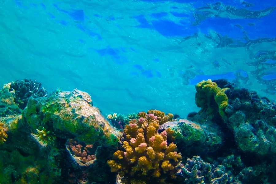 Marsa alam tours Orange Island snorkeling Trip from Hurghada