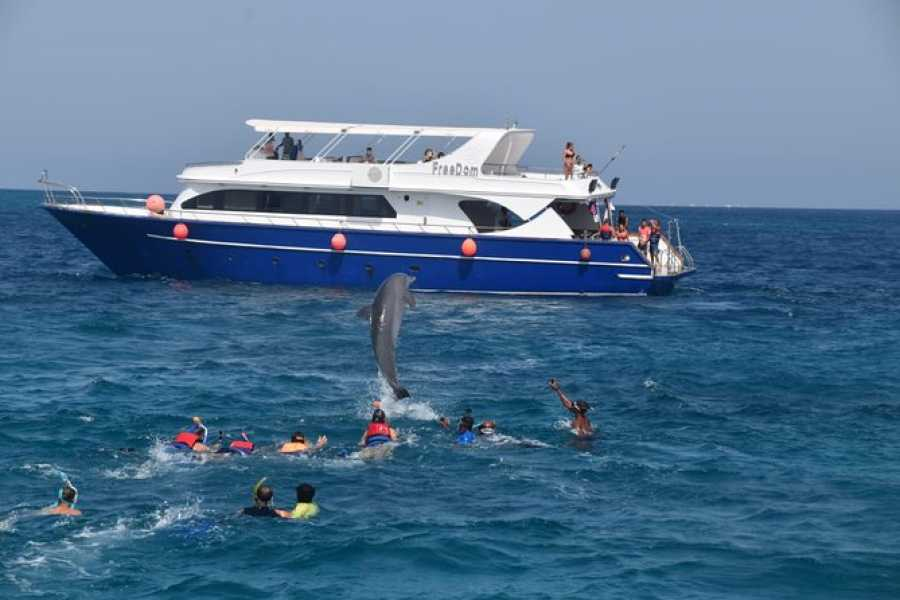 Daily tours Egypt Snorkeling trip to dolphin house from El gouna