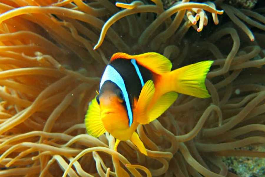 Daily tours Egypt Paradise Island Snorkeling Day Tour from El Gouna