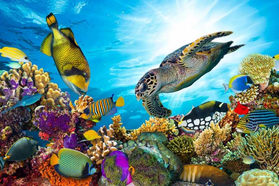 Daily tours Egypt Abu Dabbab Dugong Snorkelling Tour from El Gouna