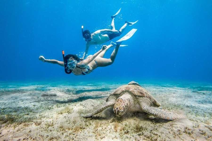 Daily tours Egypt Abu Dabab full day Snorkeling Tour from Makadi bay