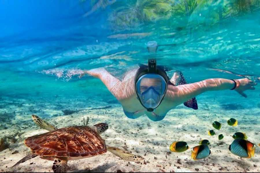 Daily tours Egypt Private Snorkeling Boat Trip to Dolphin house from Makadi bay