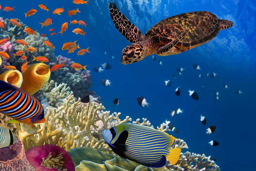 Daily tours Egypt Snorkeling Tour At Port Ghalib from Marsa Alam