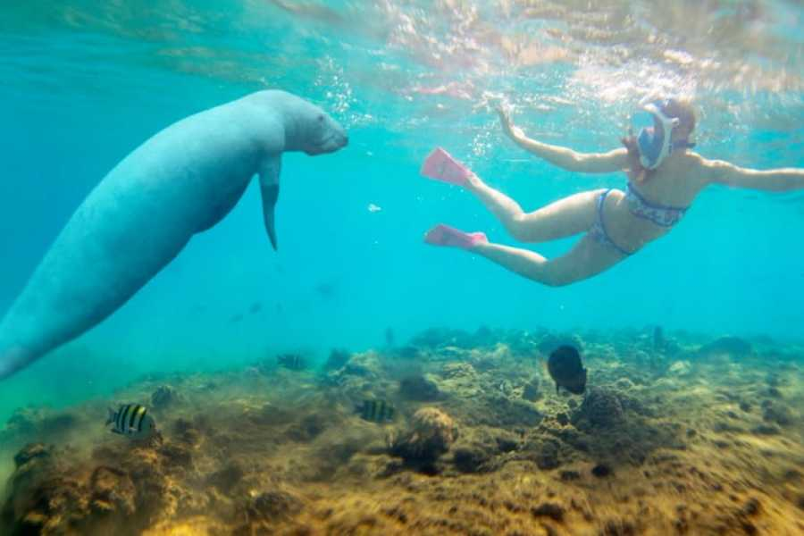 Daily tours Egypt Abu Dabbab Dugong bay Snorkeling tour from Soma Bay