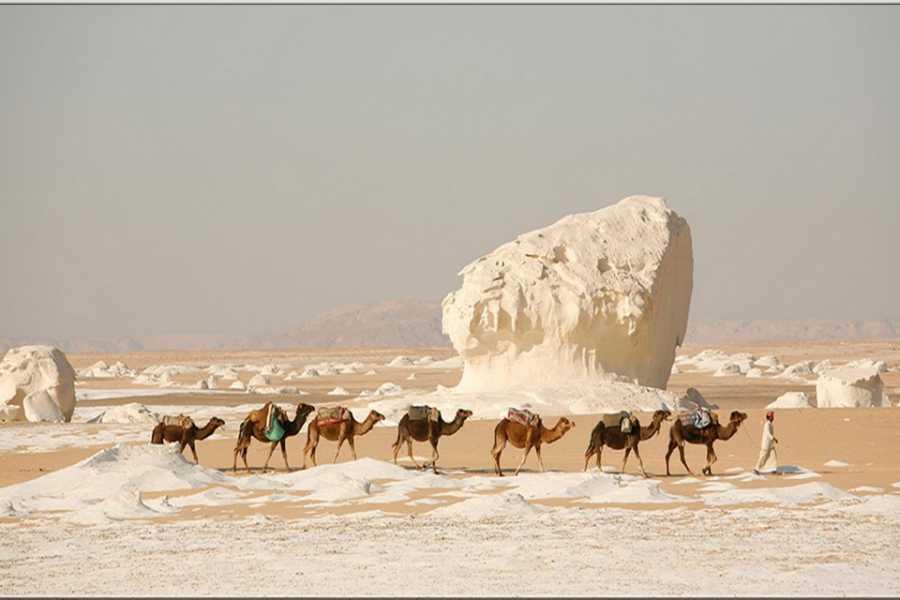 Marsa alam tours 3 day trip toBahariya Oasisandwhite desertfrom Alexandria