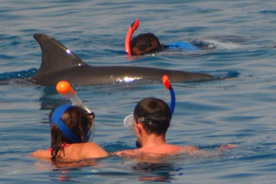 Daily tours Egypt Dolphin house snorkeling trip from Soma bay