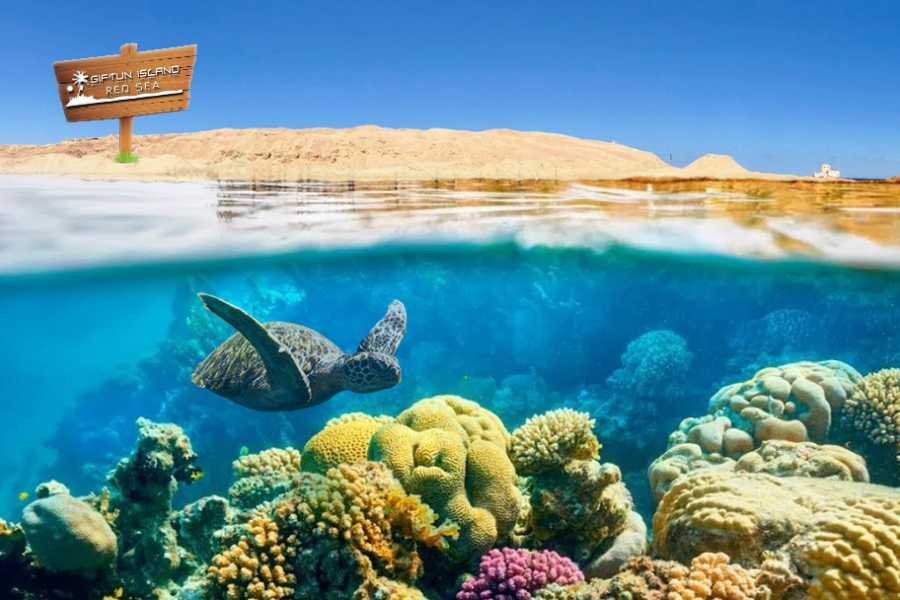 Daily tours Egypt Giftun Island Snorkeling Tours From Soma Bay