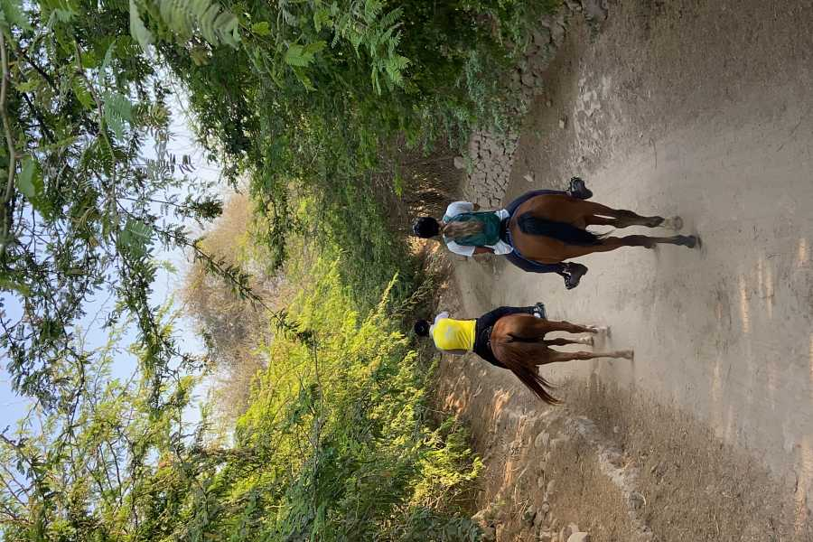 Adventurati Outdoor RAK Horseback Safari Ride
