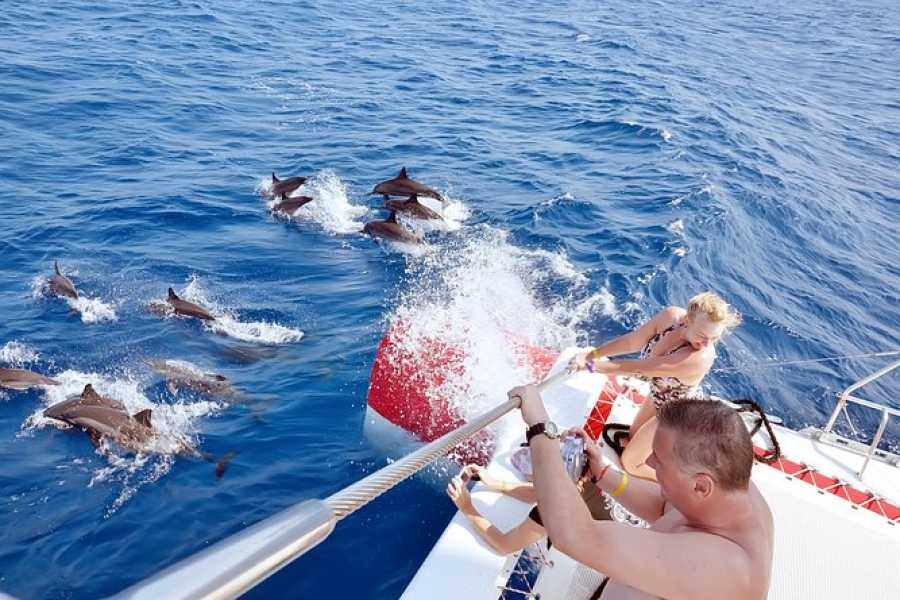 Daily tours Egypt Snorkeling Trip At Sataya Dolphin Reef from Port ghalib