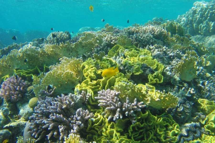 Daily tours Egypt Marsa Mubarak Snorkeling Tour from Port ghalib
