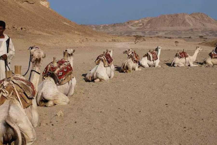 Daily tours Egypt Wadi El Gemal National Park Tour From Port ghalib