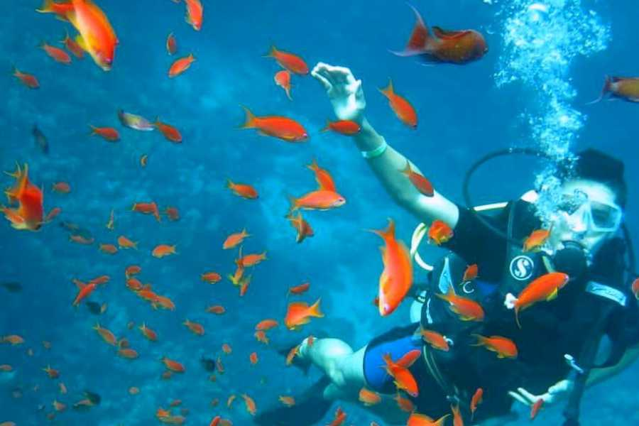 Daily tours Egypt Scuba Diving 2 Days Course in Port ghalib