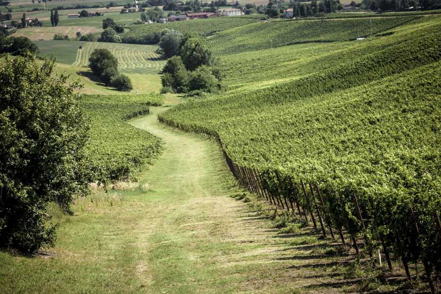 IF Imola Faenza Picnic in Umberto Cesari's vineyards