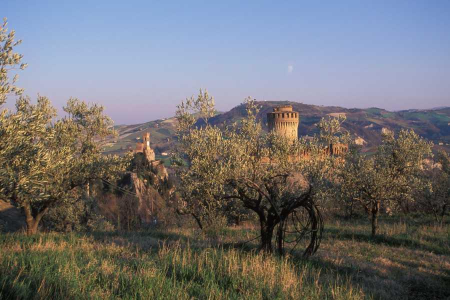 IF Imola Faenza The Oil Trail, Brisighella and the Brisighello