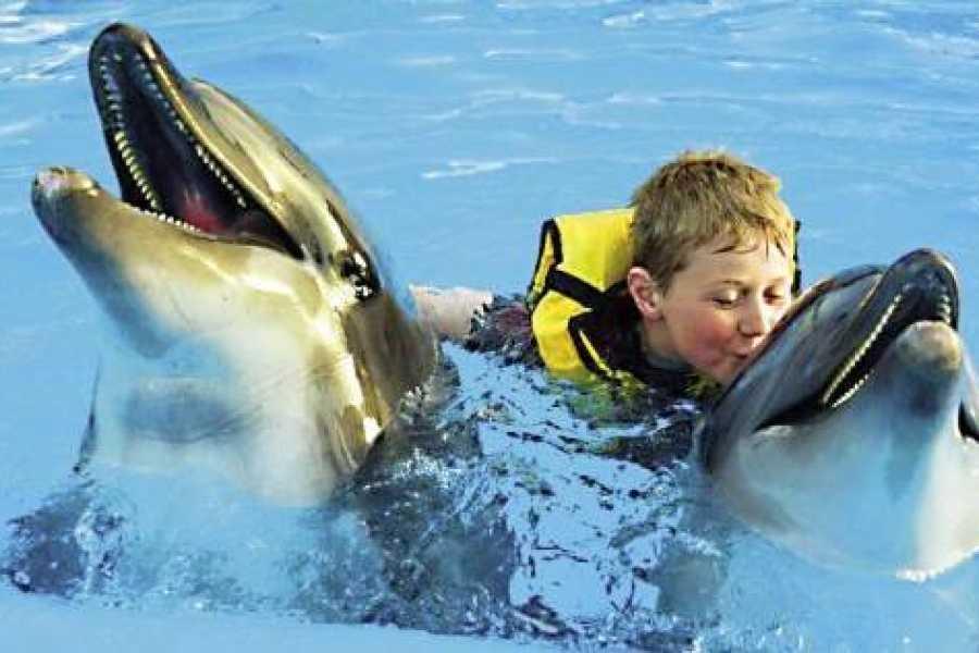 Marsa alam tours Swim with dolphins in Sharm el Sheikh